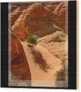 Lone Tree At Coyote Buttes Arizona Wood Print