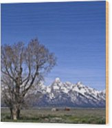 Lone Tree At Tetons Wood Print
