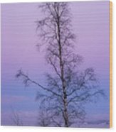 Lone Tree At Winter Sunset Wood Print