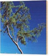 Lone Tree Hawaii Wood Print