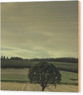 Lone Tree In The Field Wood Print