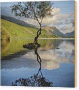 Lone Tree, Llyn Padarn Wood Print