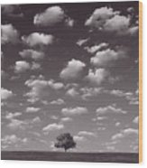 Lone Tree Morning In B And W Wood Print