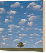 Lone Tree Morning Wood Print