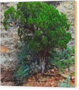Lone Tree On A Cliff Wood Print