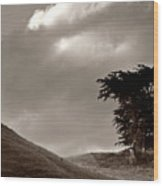 Lone Tree On A New Zealand Hillside Wood Print
