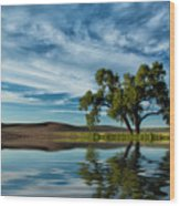 Lone Tree Pond Reflection Wood Print