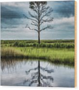 Lone Tree Reflected Wood Print