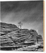 Lone Tree Rid Wood Print