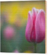Lone Tulip Wood Print