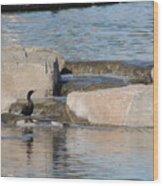 Lone Waterfowl Wood Print