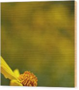 Lone Wildflower - Yellow Wood Print