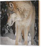 Lone Wolf IIi Wood Print
