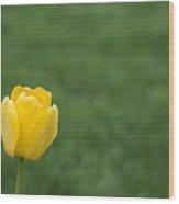 Lone Yellow Tulip II Wood Print