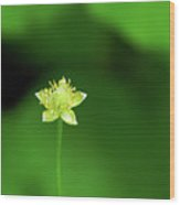 Lonely Avens Wood Print
