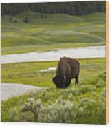 Lonely Bison Valley Wood Print