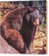 Lonely Black Bear On A Rock Wood Print