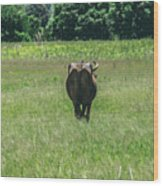 Lonely Cow 2 Wood Print