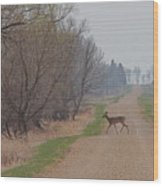 Lonely Deer Crossing Wood Print