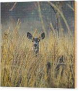 Lonely Deer In The Field Wood Print