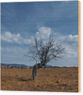 Lonely Dry Tree In A Field Wood Print