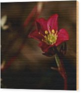 Lonely Flower Wood Print