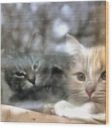 Lonely Kittens Behind The Glass Wood Print