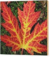 Lonely Leaf ... Wood Print