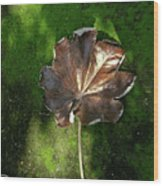 Lonely Leaf On Moss Wood Print