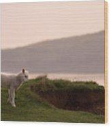 Lonely Little Lamb Wood Print