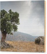 Lonely Olive Tree And Stormy Cloudy Sky Wood Print
