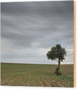 Lonely Olive Tree With Moving Clouds Wood Print