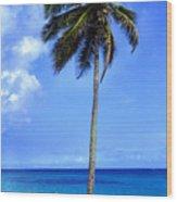 Lonely Palm Tree Los Tubos Beach Wood Print
