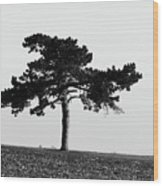 Lonely Pine Wood Print
