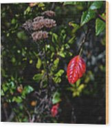 Lonely Red Leaf Wood Print