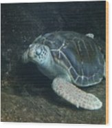Lonely Sea Turtle Wood Print