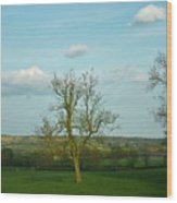 Lonely Tree Cotswold England Wood Print