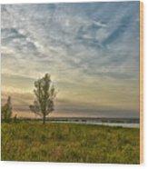 Lonely Tree In Dintelse Gorzen Wood Print