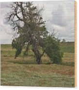 Lonely Tree In West Texas Wood Print