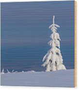 Lonely Tree On A Mountain Top Wood Print