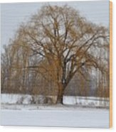 Lonely Winter Wood Print