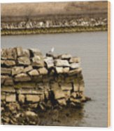 Lonesome Gull Wood Print