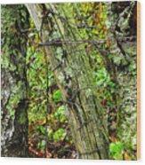 Long Ago Fence Wood Print
