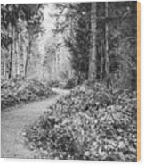 Long And Winding Path Wood Print