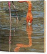 Long Colors II Wood Print