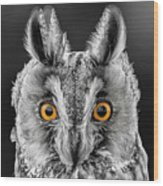 Long Eared Owl 2 Wood Print
