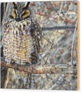 Long Eared Owl Resting Wood Print