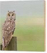 Long Eared Owl Wood Print