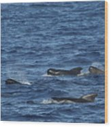 Long-finned Pilot Whales Wood Print