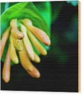 Long Flower Wood Print
